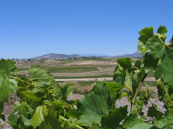Temecula's Thornton Winery