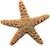 CLM Starfish