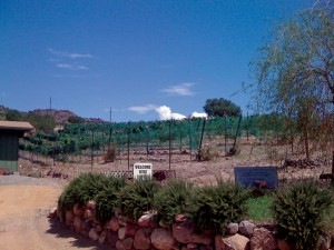 Verde-Valley-Wine-Trail-Javelina-Leap-Vineyards-hr