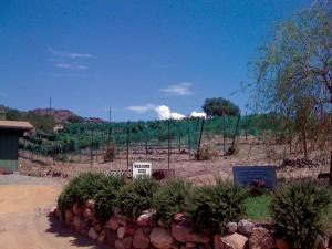 Verde-Valley-Wine-Trail-Javelina-Leap-Vineyards-hr