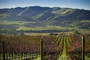 Lompoc's hills are now dotted with vineyards.