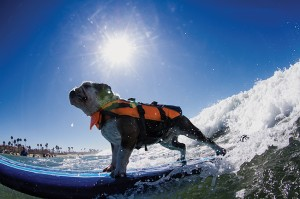 Petco Surf Dog competition, July 30